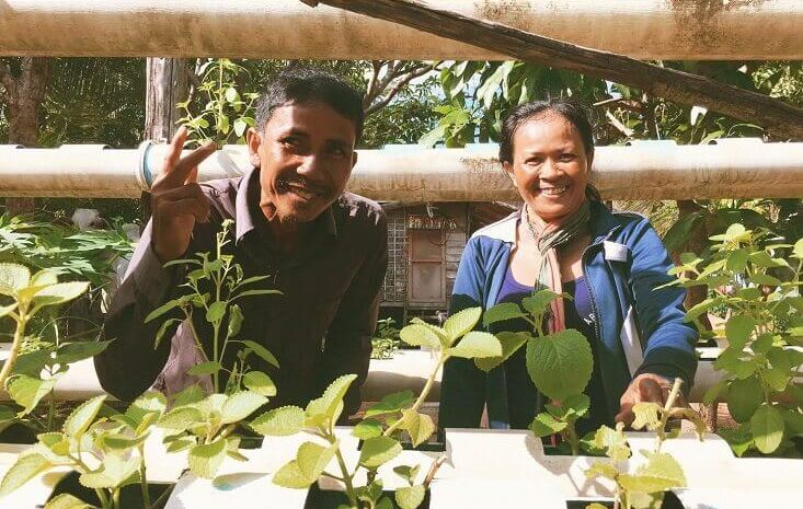 Vertical & Horizontal Organic Gardens